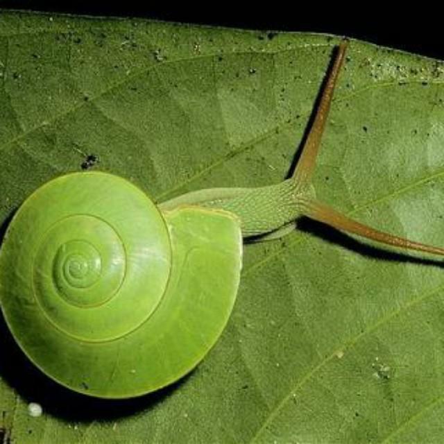 蜗牛的外形结构