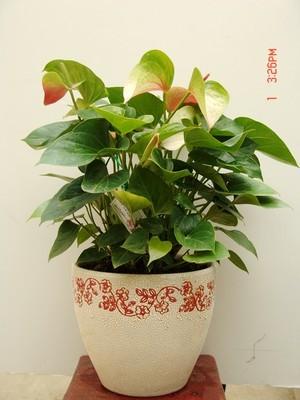 简单彩画小清新植物