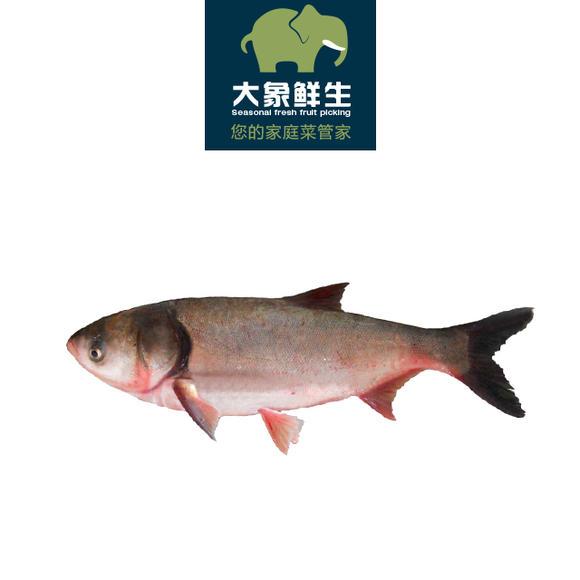 千岛湖包头鱼500g(实重收费)