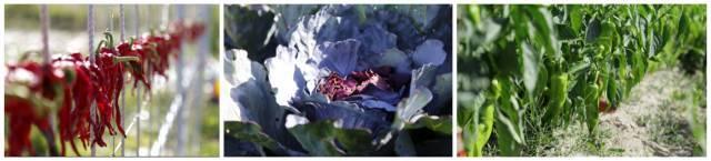 走,50元新疆天山野生动物园饲养小动物 蔬菜采摘自驾一日游!