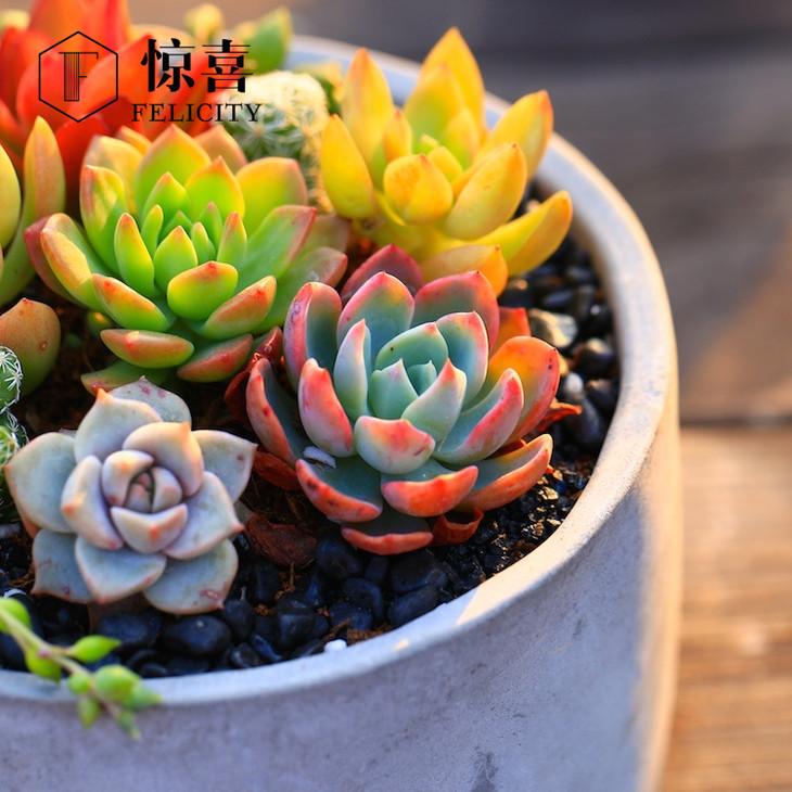 盆栽植物名称卡片
