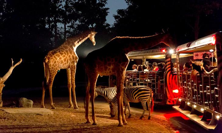 清迈夜间动物园 酒店接送