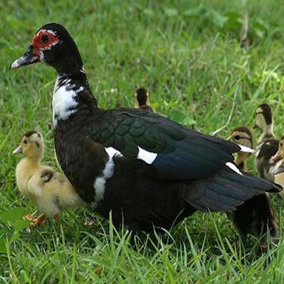 桂林洋天鹅湖动物乐园