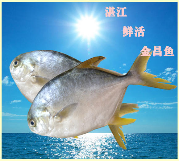 海里面的动物名称