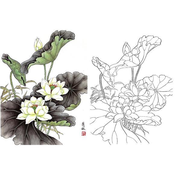 白描底稿-工笔花鸟-荷花-a302图片