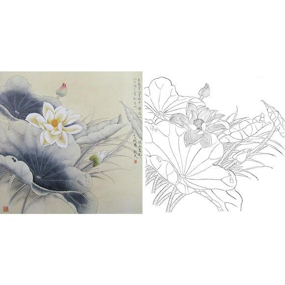 斗方小品白描底稿-工笔花鸟-荷花-a268图片