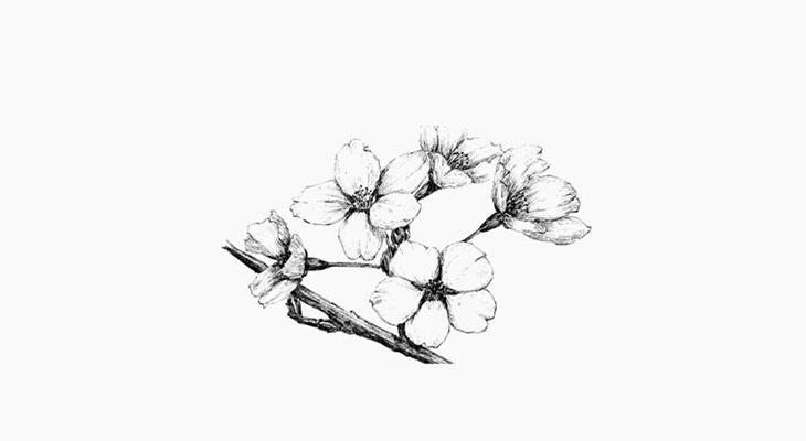 樱花简笔画图片欣赏