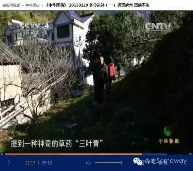 森唯-浙江三叶青草本精华皂图片