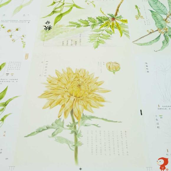 飞乐鸟《花之绘Ⅱ》彩铅花卉绘画教程 马可雷洛阿油性
