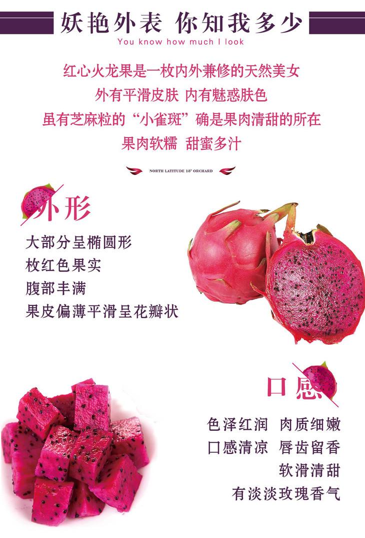【预售】北纬18°红心火龙果10斤装(10-12颗 单果400