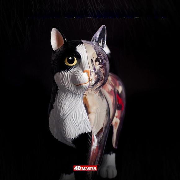 4d master 猫拼装玩具 动物模型 半透视解剖骨骼内脏