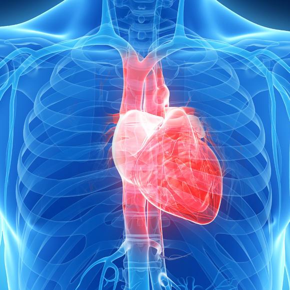 可全面系统评价心血管的形态,结构,血流动力学状态和心脏功能,已成为