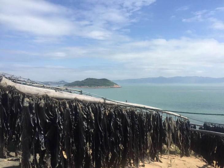 西洋岛,位于霞浦县东南海城.岛屿离霞浦县城37公里.