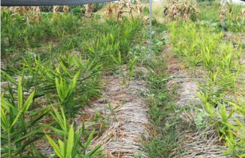 2017年亮亮农场小黄姜成长记猪肉泥和菠菜泥图片