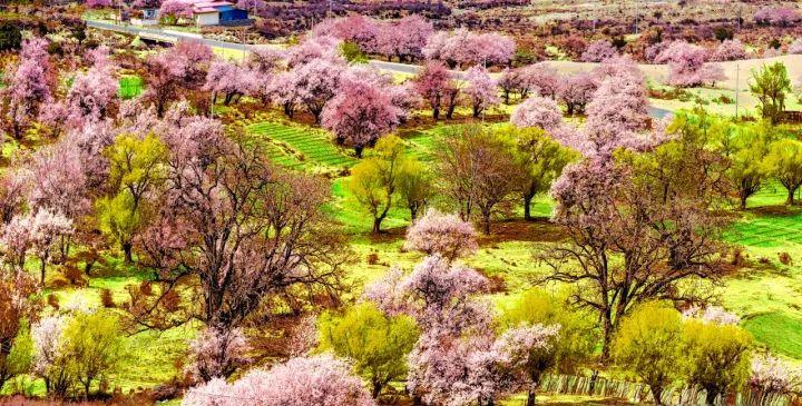 【西藏】拉萨-林芝桃花--然乌湖-雅鲁藏布江大峡谷7/9图片