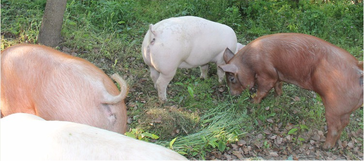 地瓜手工制作动物
