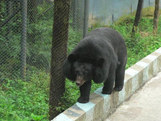 【雅安碧峰峡野生动物园】79元/人,近距离观看猛兽,萌宠喂养,赏精彩
