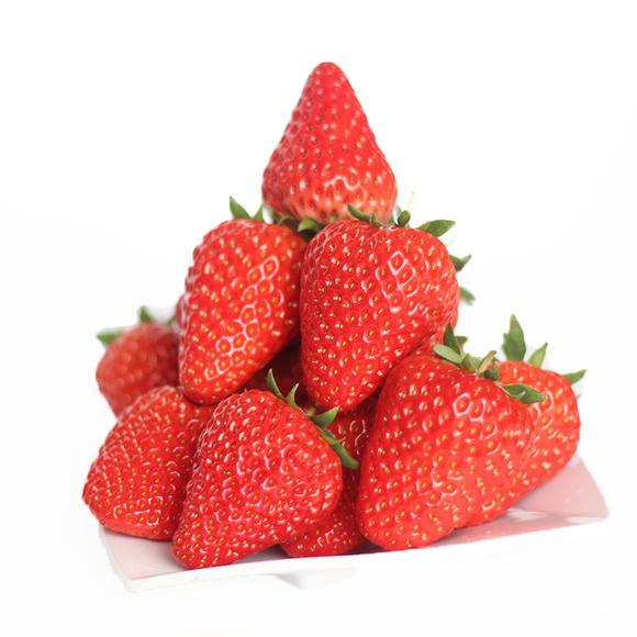 顶级口感|空运正品辽宁丹东特级牛奶99草莓 1盒装(约1