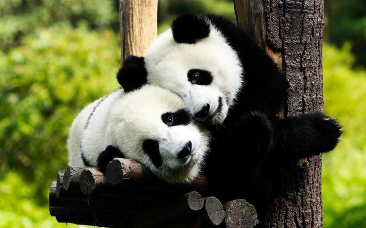 沈阳世博园,森林动物园,熊猫馆,熊猫剧场门票优惠