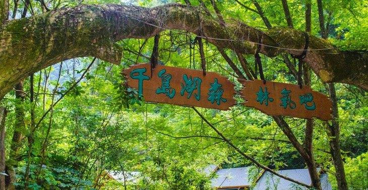 【超值门票】千岛湖森林氧吧景区成人票(送森林滑草门票)图片