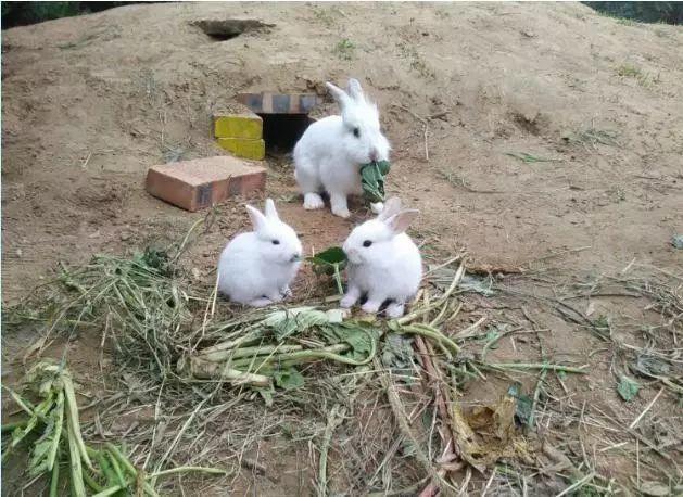 喂养小动物,跟萌萌的小动物一起做朋友.