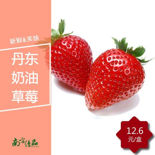 【拍前请看温馨提示】丹东奶油草莓(2盒起购,每盒约11颗) 商品图0