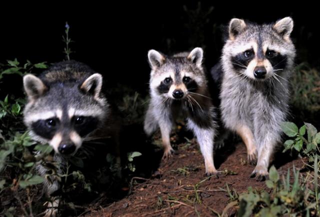 动物城奇妙夜   夜游上海野生动物园