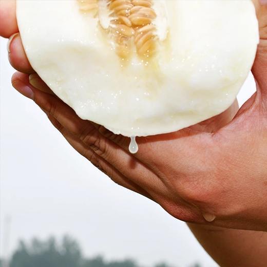 陕西·头茬阎良甜瓜 果肉香甜 瓜香浓郁 皮薄多汁  果园采摘 5斤装/10斤装 商品图3