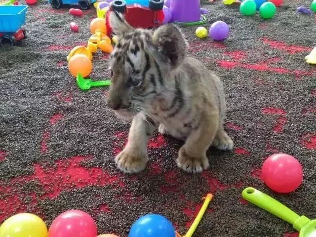 9抢购顺义虎鳄农场动物主题公园,让您感受不一样的动物世界