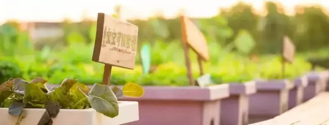 动物喂养 喂小动物对小朋友有着致命的吸引力 小蜜蜂农场里的小