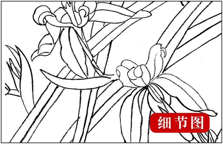 ts12 工笔画团扇白描底稿 国画花鸟临摹勾线实物打印