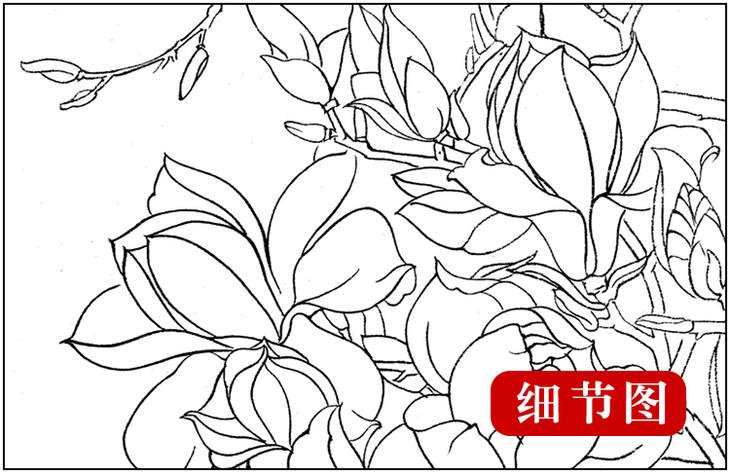 ts30 工笔画团扇白描底稿 国画花鸟临摹勾线实物打印