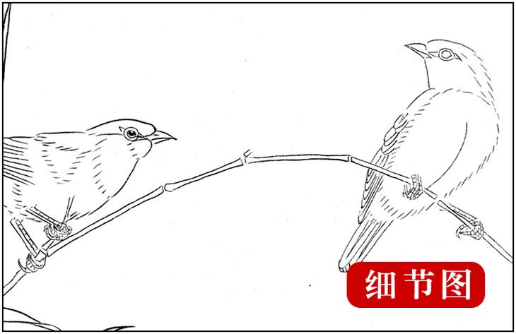 ts24 工笔画团扇白描底稿 国画花鸟临摹勾线实物打印