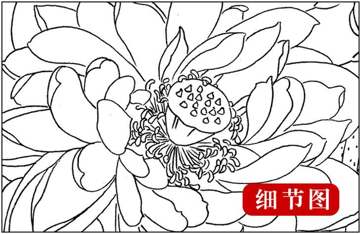 ts16 工笔画团扇白描底稿 国画花鸟临摹勾线实物打印