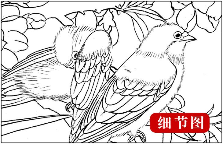 ts2工笔画团扇白描底稿国画花鸟临摹勾线实物打印图片