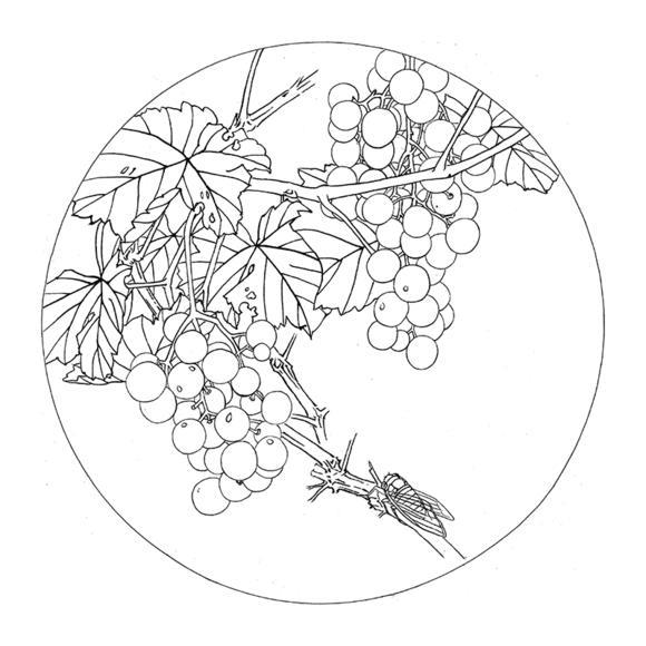 ts62工笔画葡萄白描底稿国画花鸟小品团扇线描临摹透