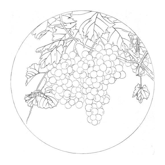 ts75高清工笔画葡萄团扇白描底稿国画花鸟小品临摹素材勾线打印稿