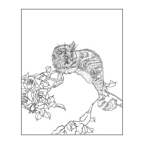 df157高清工笔画动物花鸟猫小品白描底稿临摹勾线实物