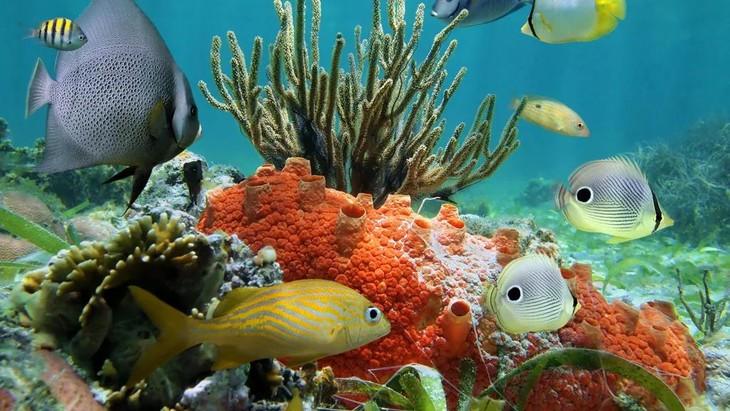 壁纸 动物 海底 海底世界 海洋馆 水族馆 鱼 鱼类 730_411