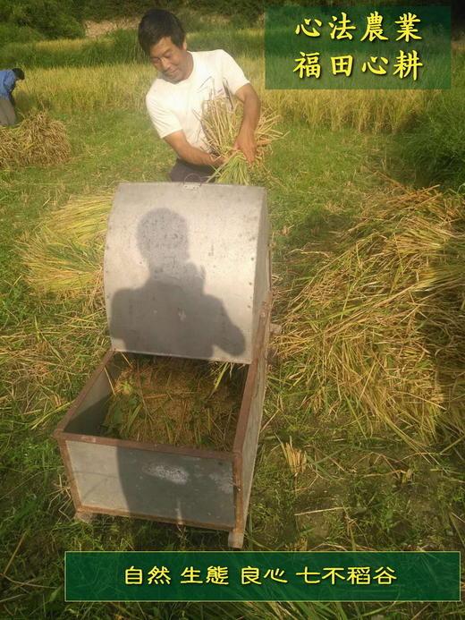富硒七不红米 红皮大米 2020年11月东北海伦伦河镇黑土寒地七不种植基地自产 明安心法农业 自有品种 商品图6