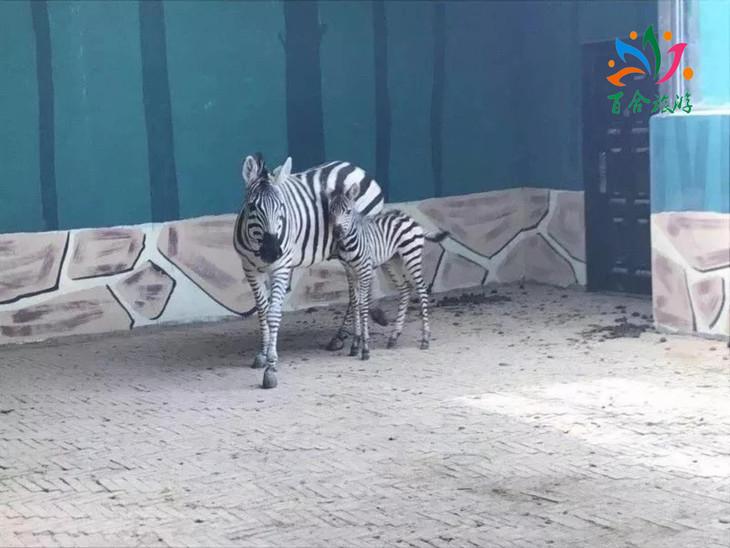 【新乡,长垣儿童票】濮阳野生动物园门票(新乡,长垣县