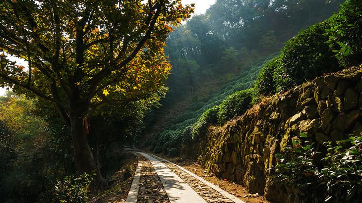 郎当岭古道是无锡周边最值得去的古道之一,也是杭州醉梦的森林古道
