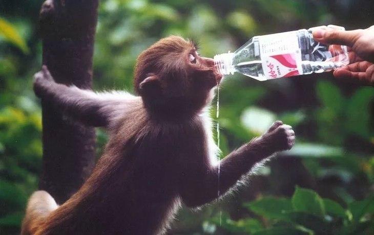 走在山间小路上,成群结队的小猴子超级可爱!而且一点也不怕人哦!