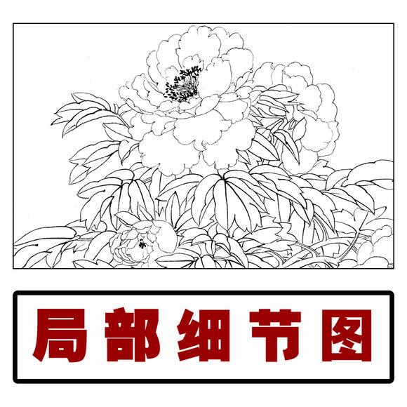 hf109工笔画白描底稿孔雀牡丹白描稿国画花鸟画临摹稿