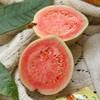 送5包酸梅粉 | 红心番石榴 芭乐 清脆鲜甜 软糯香甜 低糖健康水果 商品缩略图1