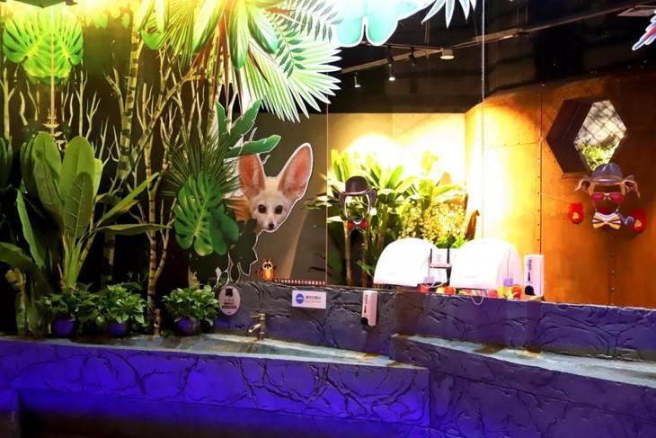 天河城这家超大室内动物园来了!龙猫,羊驼,浣熊,水豚.