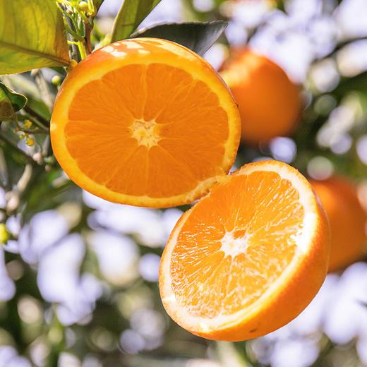 伦晚帝王橙 春橙现摘现发 自家果园橙子果大皮薄 汁多味美 肉质细嫩 不打蜡4斤装 商品图4