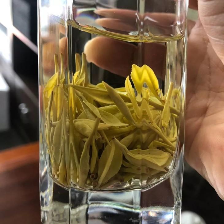 茶中黄金~明前至尊头采黄金芽 2019新茶黄金叶珍稀黄金白茶茶叶 礼盒
