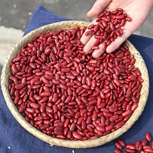 【山西 • 五寨红芸豆】大小均匀 粒粒饱满的花腰豆 五谷杂粮豆 商品图2