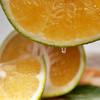 可直接吸的福建漳州葡萄柚 皮薄多汁 酸甜爽口 柚香四溢 净重4.8-5.2斤 商品缩略图1